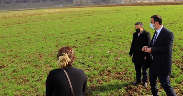 Bingöl ovasında ekilen buğday gözlendi