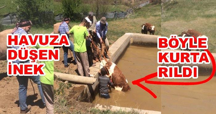 Bingöl'de havuza düşen inek kurtarıldı