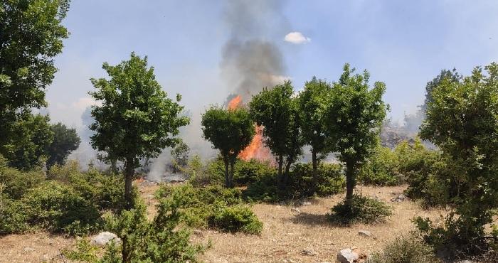 Genç'te orman yangını! itfaiye ve köylüler söndürdü