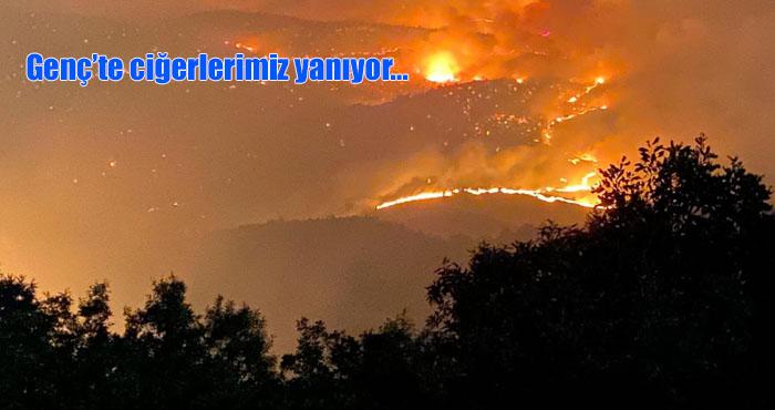 Genç'te yangın! Ormanlar cayır cayır yanıyor