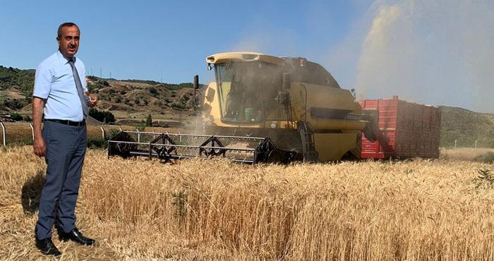 Genç Belediyesinden örnek çalışma! 1.5 ton buğday üretildi