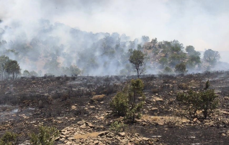 Bingöl'de ormanlık alandaki yangın büyümeden söndürüldü
