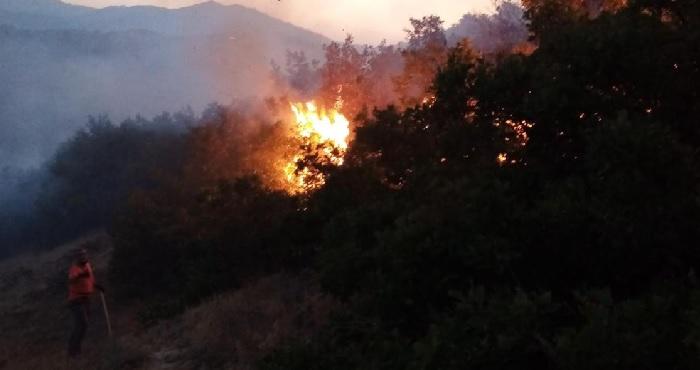 Yine orman yangını! Bu kez büyümeden söndürüldü