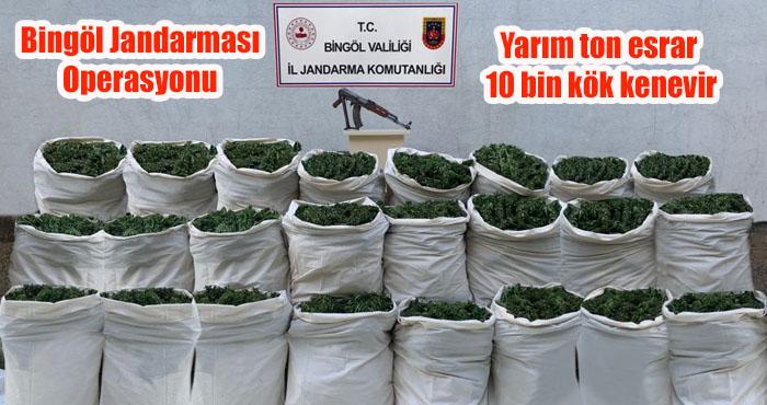 Bingöl'de 665 kilogram esrar ile 10 bin kök kenevir ele geçirildi