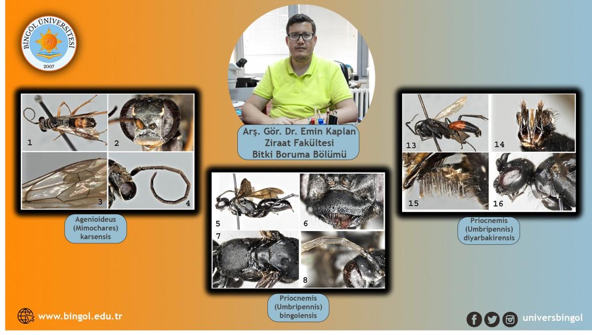 Bilim insanları 3 yeni arı türü keşfetti